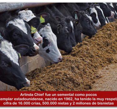 Manejo de ganado bovino pdf